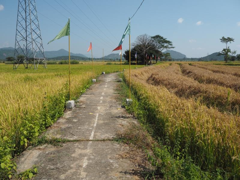 Дорога к святилищу богини Бхавани, д. Ранипета