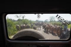 В окрестностях г. Гунупур